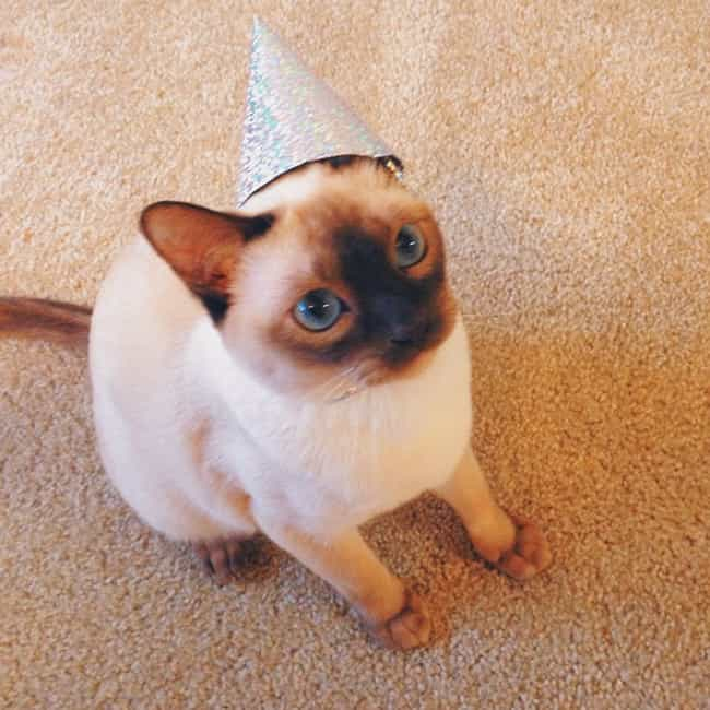 """""""Um, I Was Told The... is listed (or ranked) 1 on the list 27 Cats Who Are Moderately Excited About Their Birthdays"""