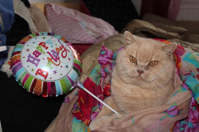 """""""Aww Isn't This Bal... is listed (or ranked) 4 on the list 27 Cats Who Are Moderately Excited About Their Birthdays"""