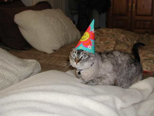 """""""I've Rejected Your... is listed (or ranked) 3 on the list 27 Cats Who Are Moderately Excited About Their Birthdays"""