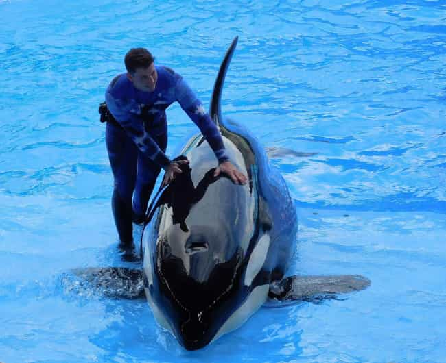 After Widespread Critici... is listed (or ranked) 1 on the list 26 Things You Should Know About SeaWorld