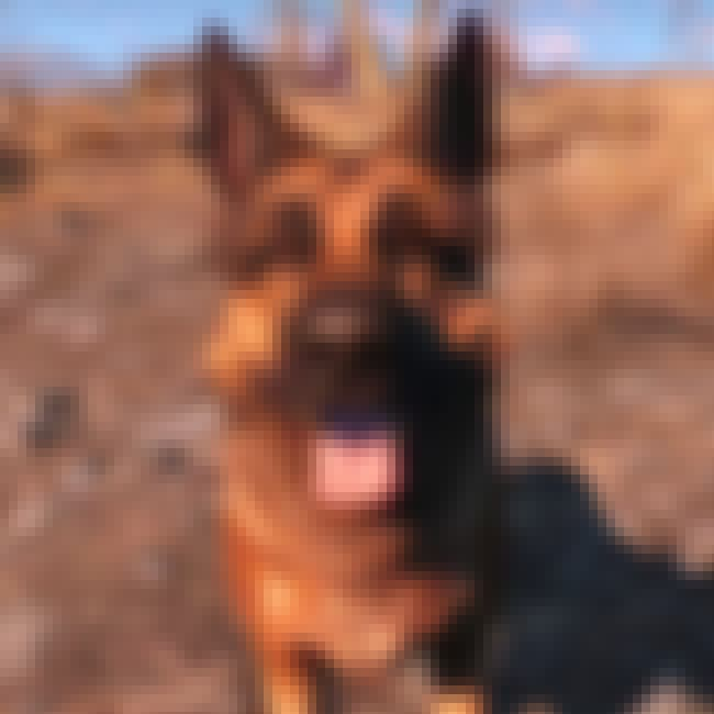 Dogmeat (Fallout 4) is listed (or ranked) 4 on the list The Very Best NPCs and Companions in the Fallout Games