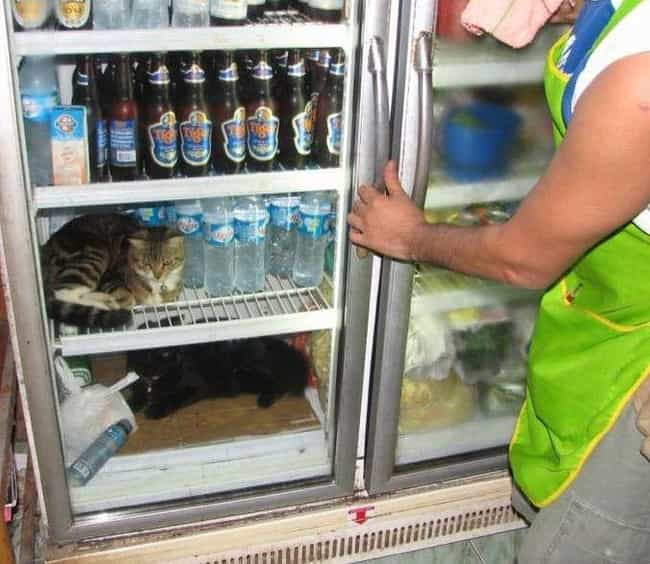Consumer Kitty Claims He's... is listed (or ranked) 2 on the list 27 Cats Who Are in the Fridge and Don't Even Care