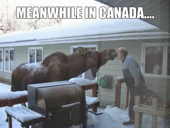 Morning, Bob! is listed (or ranked) 1 on the list Meanwhile in Canada . . .