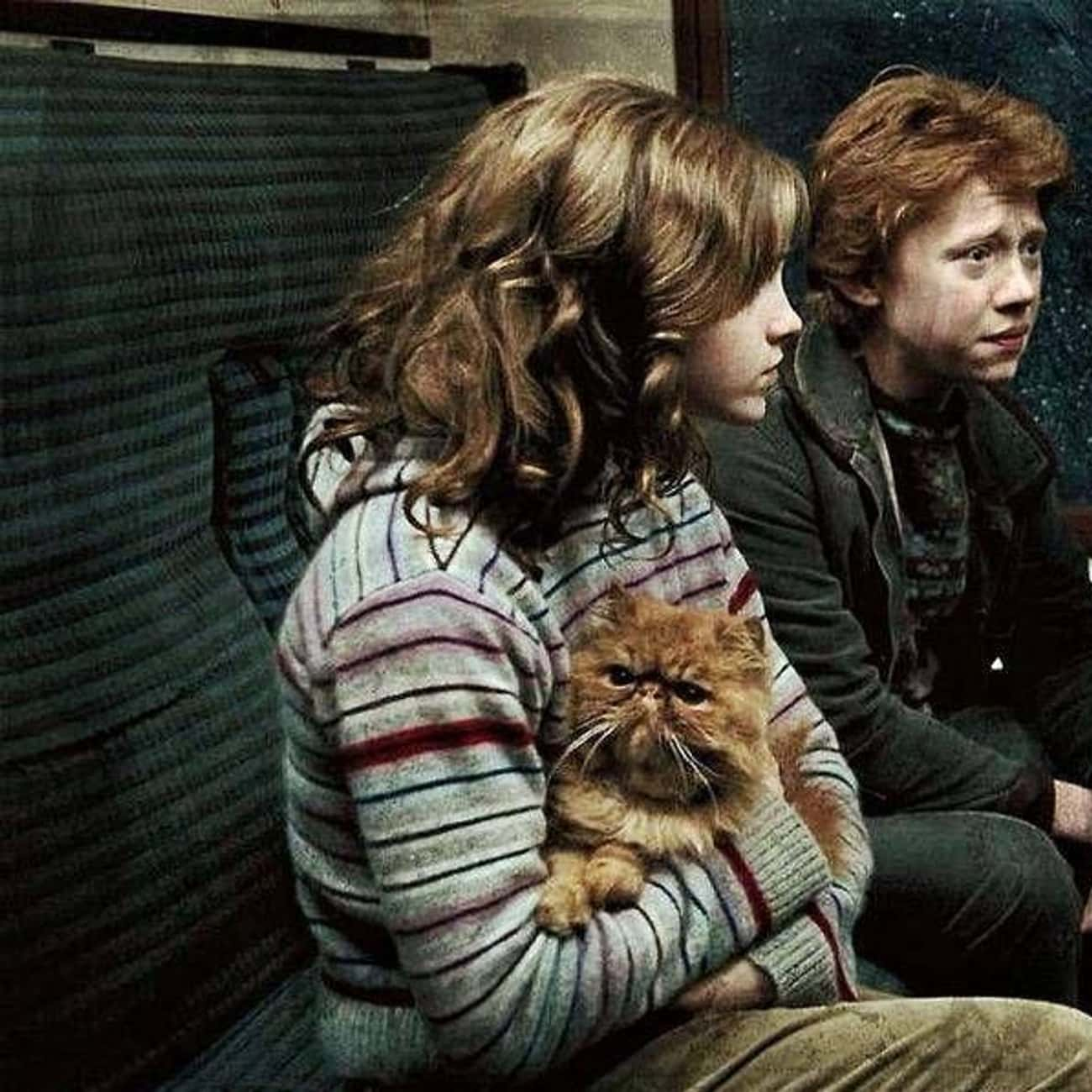 Crookshanks Used To Belong To  is listed (or ranked) 4 on the list The Craziest Harry Potter Fan Theories That Could Be True