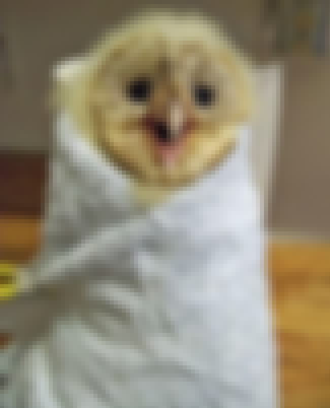 """""""Heeeeeey!"""" -This Ador... is listed (or ranked) 2 on the list 29 Animals Who Love Their Blankets"""