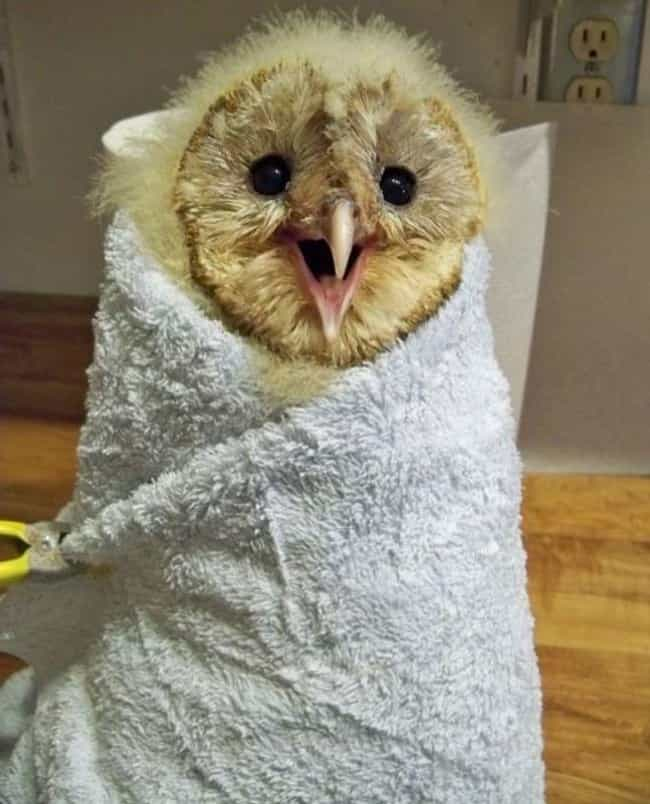 """Heeeeeey!"" -This Ador... is listed (or ranked) 2 on the list 29 Animals Who Love Their Blankets"