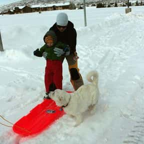 Sledding is listed (or ranked) 4 on the list The Best Snow Sports to Play and Watch
