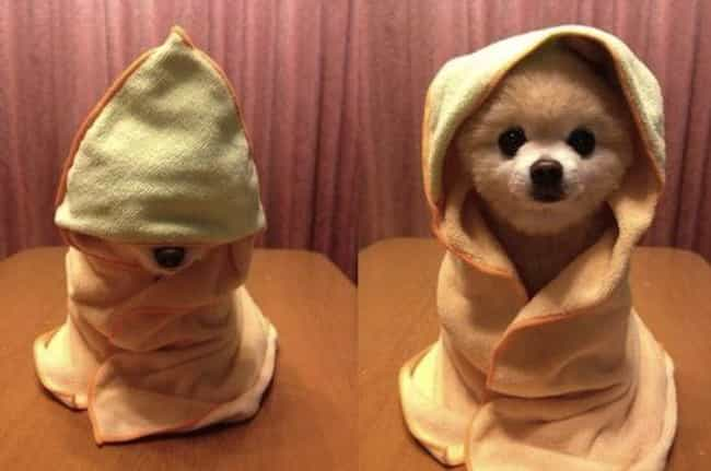 Amateur Magician Pooch and His... is listed (or ranked) 1 on the list 29 Animals Who Love Their Blankets