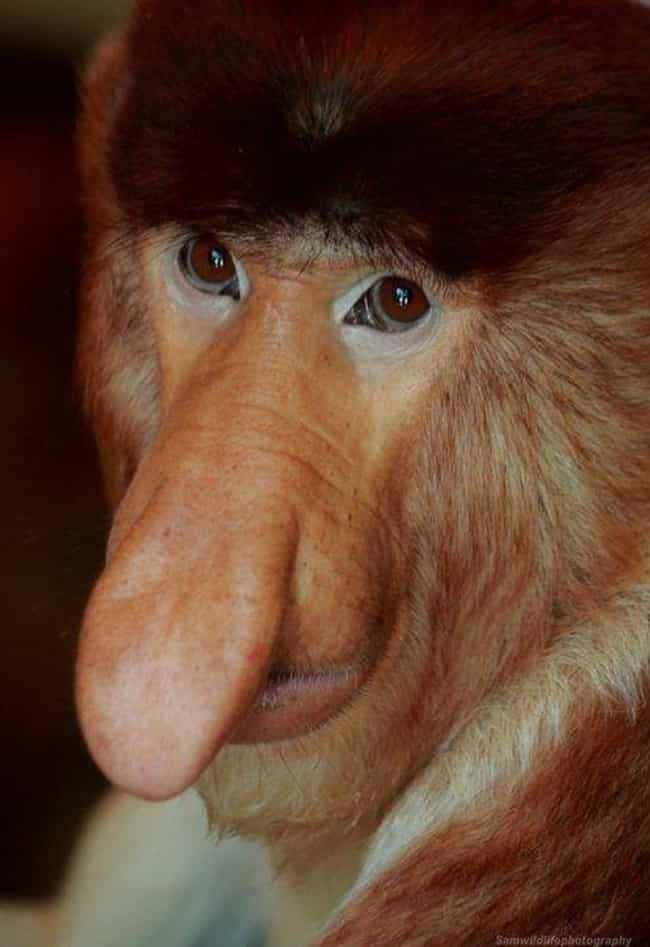 34 Of The Silliest-Looking Animals on Earth