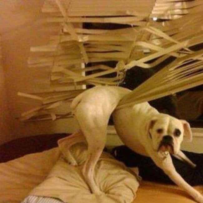 """""""The Blinds Started It.... is listed (or ranked) 4 on the list Animals Who Have Really Gotten Themselves in a Predicament"""