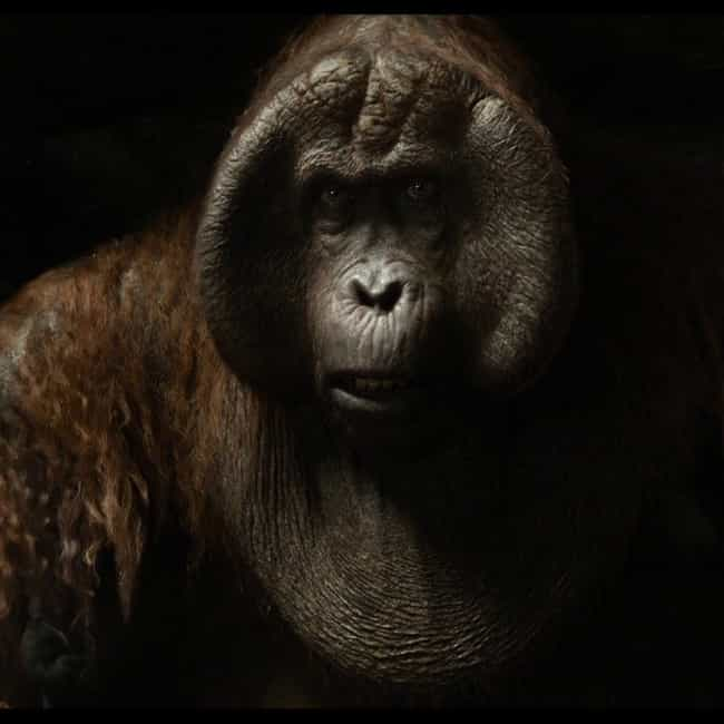 I Got Ears is listed (or ranked) 2 on the list The Jungle Book 2016 Movie Quotes
