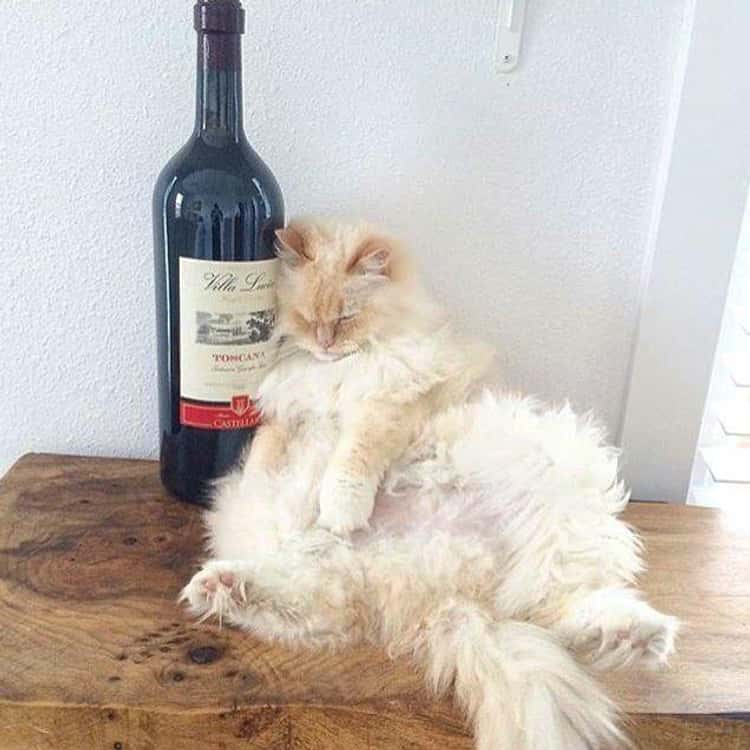 """It's Wino Clock Somewhere"""