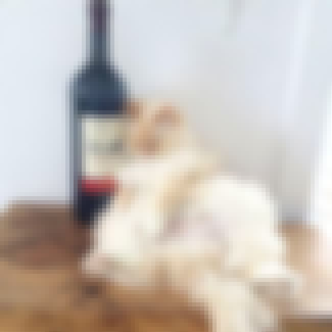 """It's Wino Clock Somew... is listed (or ranked) 1 on the list 23 Cats Who Love Wine More Than You Do"