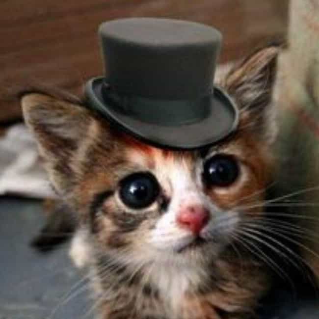 "Tiny Gent Cat Says ""G'... is listed (or ranked) 1 on the list 32 Insanely Adorable Cats Wearing Hats"