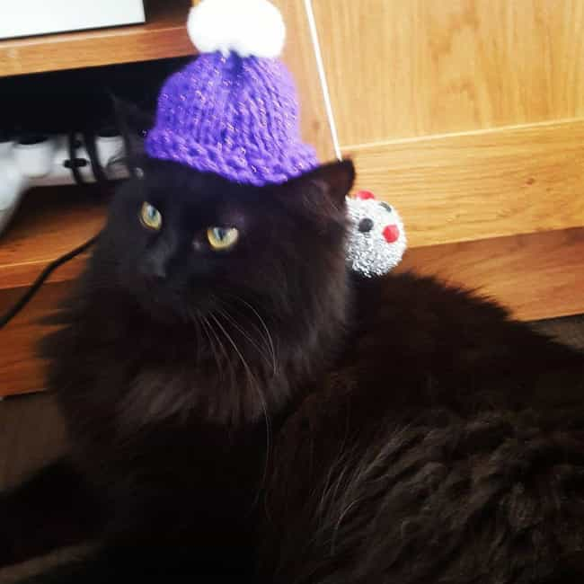 Fluffy Loathes the Day His Fur... is listed (or ranked) 3 on the list 32 Insanely Adorable Cats Wearing Hats