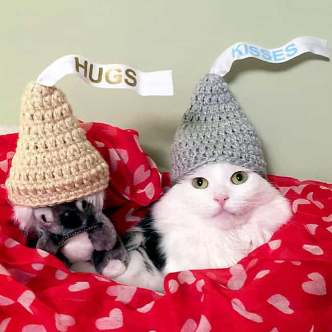 X's and O's is listed (or ranked) 2 on the list 32 Insanely Adorable Cats Wearing Hats