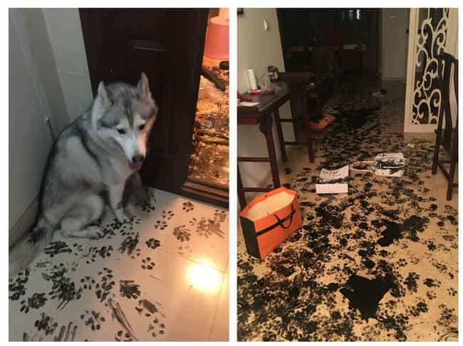"""""""I Think I May Have Forgot... is listed (or ranked) 3 on the list 23 Hilarious Pet Disasters That Might Never Get Cleaned Up"""