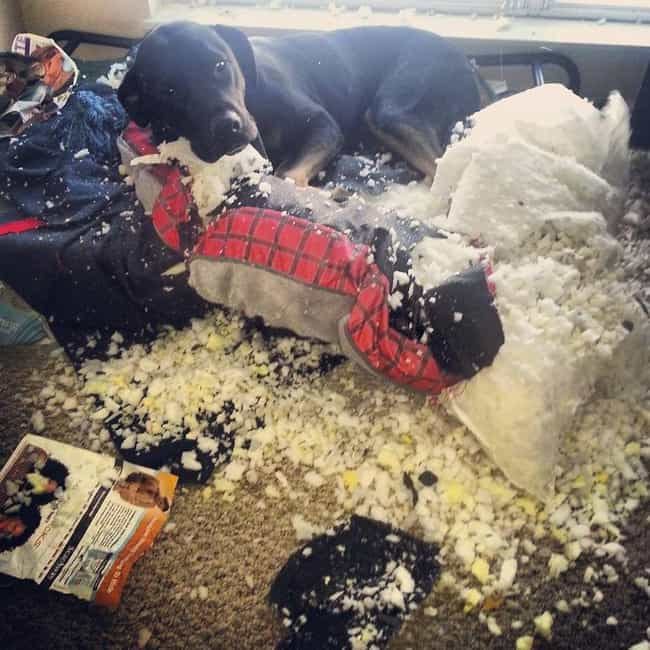 """""""Thank God You're Home... is listed (or ranked) 4 on the list 23 Hilarious Pet Disasters That Might Never Get Cleaned Up"""