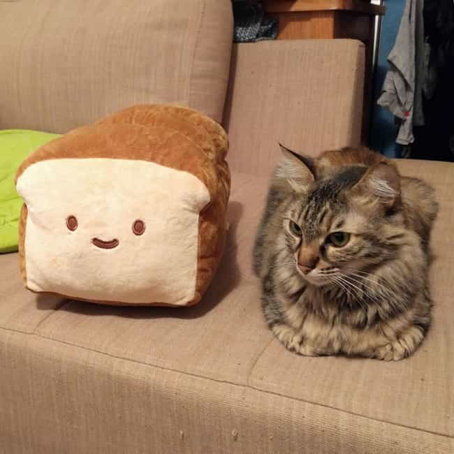 """I Sense An Impostor Among... is listed (or ranked) 2 on the list 28 Cats Who Are Perfectly Impersonating a Loaf of Bread"