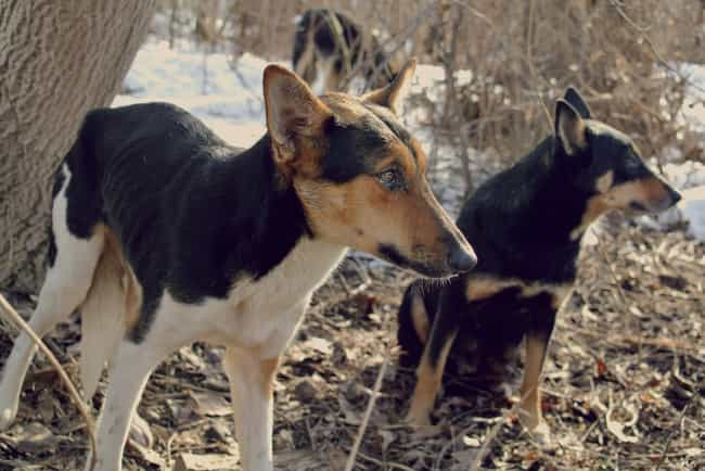 Wild dogs keep running in fron... is listed (or ranked) 4 on the list Train Conductors Describe The Creepiest Things They've Seen
