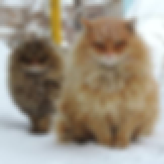 """What Snow?"" is listed (or ranked) 1 on the list The Floofiest Kitties in the Entire World"