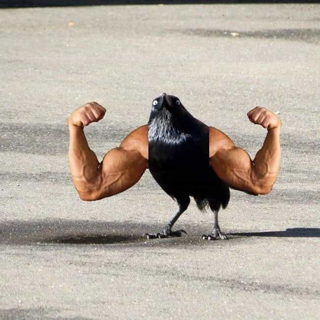 """""""Bro. Do You Even L... is listed (or ranked) 4 on the list 29 Birds Who Have Arms for Some Reason"""