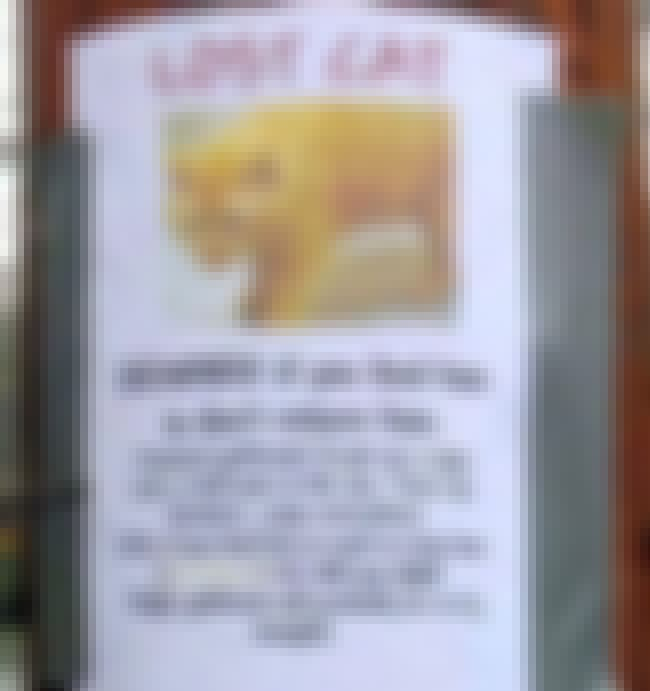 You Have Cat to be Kitten Me R... is listed (or ranked) 3 on the list 26 Funny Lost and Found Signs That Are on Point