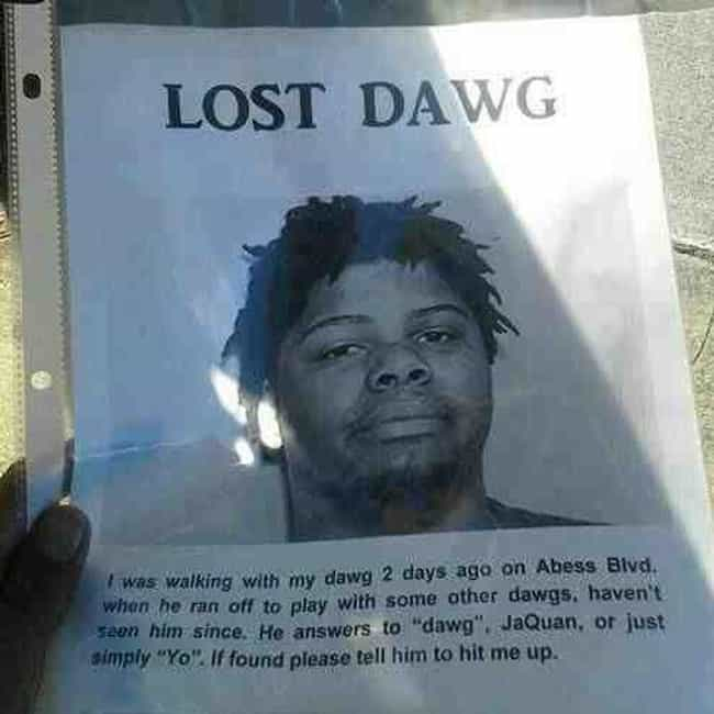 Dawg Days of Summer is listed (or ranked) 1 on the list 26 Funny Lost and Found Signs That Are on Point
