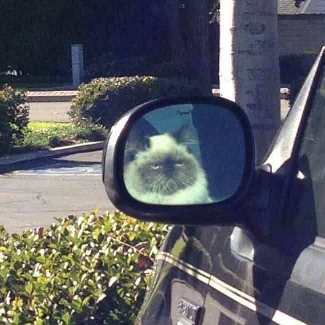 Mirror Cat Is Not Impressed is listed (or ranked) 4 on the list Hilarious Reflections Caught on Camera