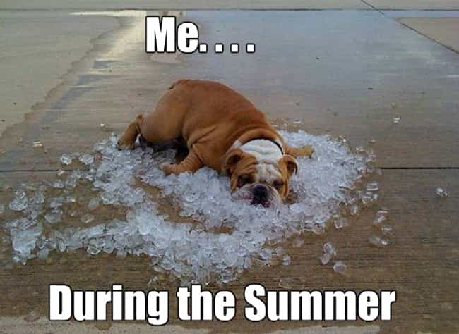Summer Be All Like... is listed (or ranked) 3 on the list 21 Memes That Are So You This Summer
