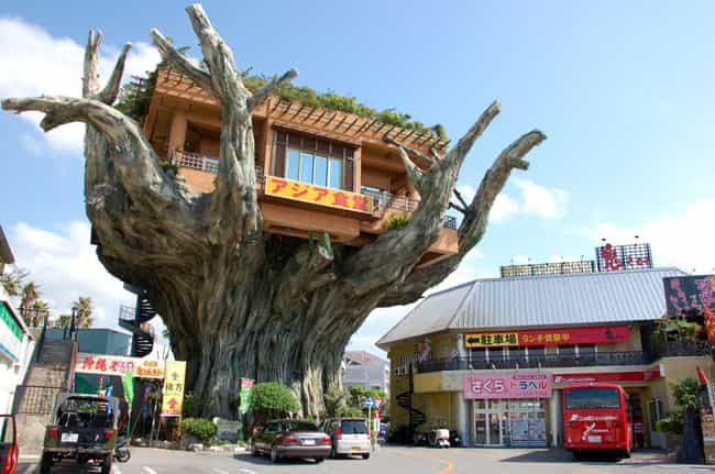 Grab Lunch in a Tree House at ... is listed (or ranked) 8 on the list Weird and Wacky Building Shapes Around the World