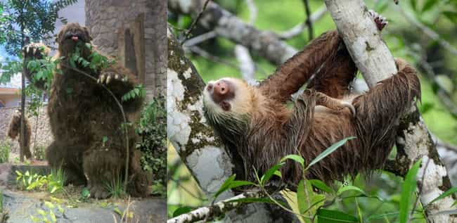 Sloth is listed (or ranked) 4 on the list Things That Were Terrifyingly Bigger In Prehistoric Times