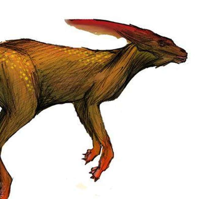 Nebraska: the Phantom Kangaroo is listed (or ranked) 27 on the list Craziest Humanoid Cryptids by State