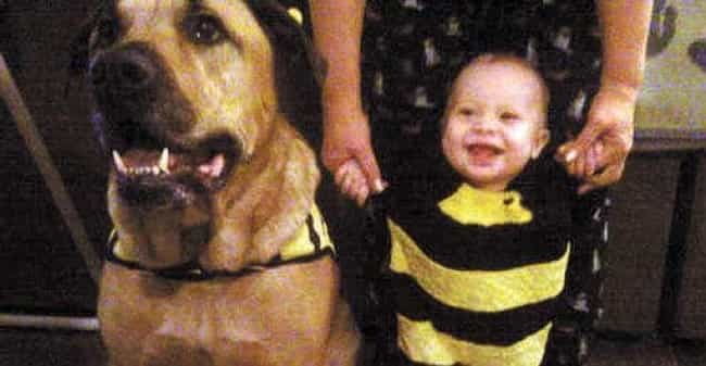 Baby's First Birthday Turns Tr... is listed (or ranked) 2 on the list Children Who Were Killed by Family Pets