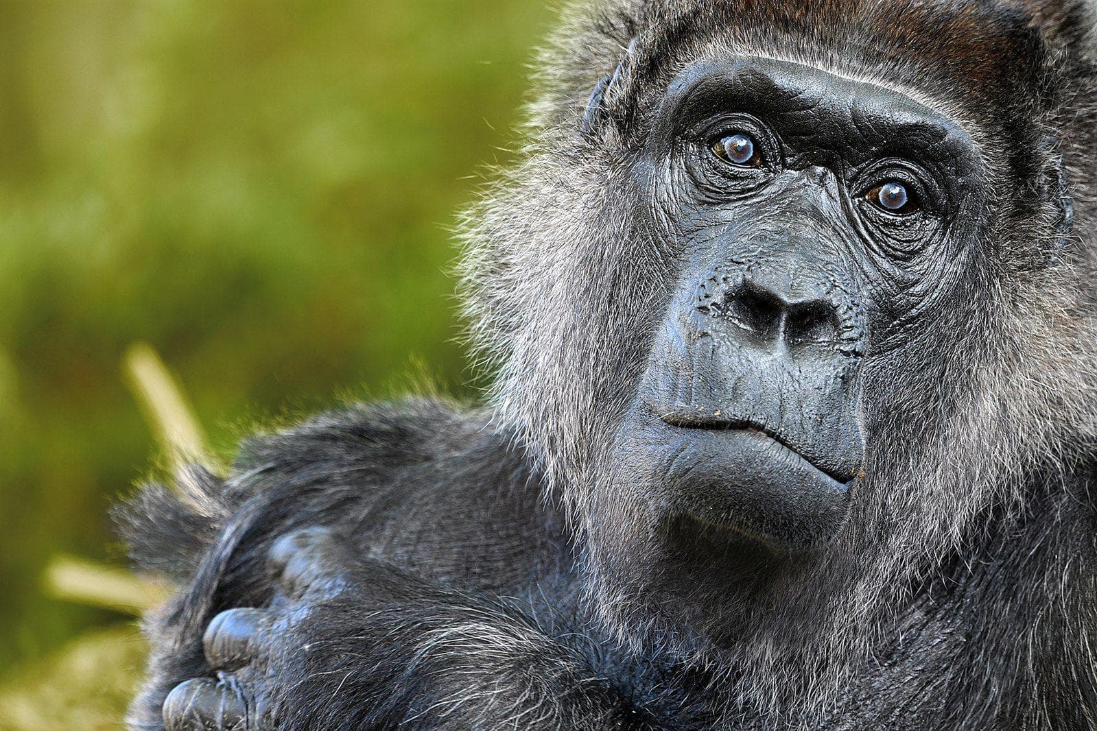 Random Surprising Animal Heroes Who Changed Human Lives