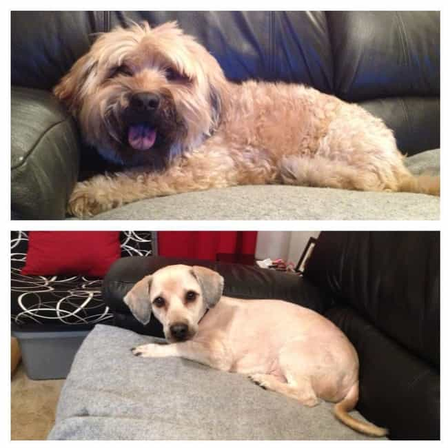 """Dude, How Much Did I Drin... is listed (or ranked) 1 on the list Dogs Who Got Their Hair Done: Before and After"