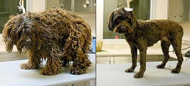 """I Told Weight Watchers I ... is listed (or ranked) 2 on the list Dogs Who Got Their Hair Done: Before and After"