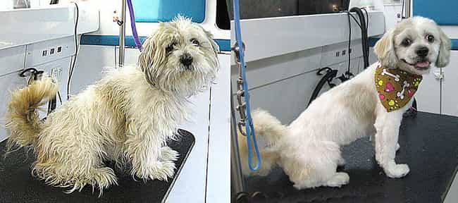 """I Feel 10 Pounds Lighter!... is listed (or ranked) 3 on the list Dogs Who Got Their Hair Done: Before and After"