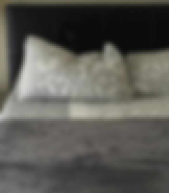 When You See It: Headboard Dog... is listed (or ranked) 2 on the list Dogs Who Accidentally Blended in with Their Surroundings