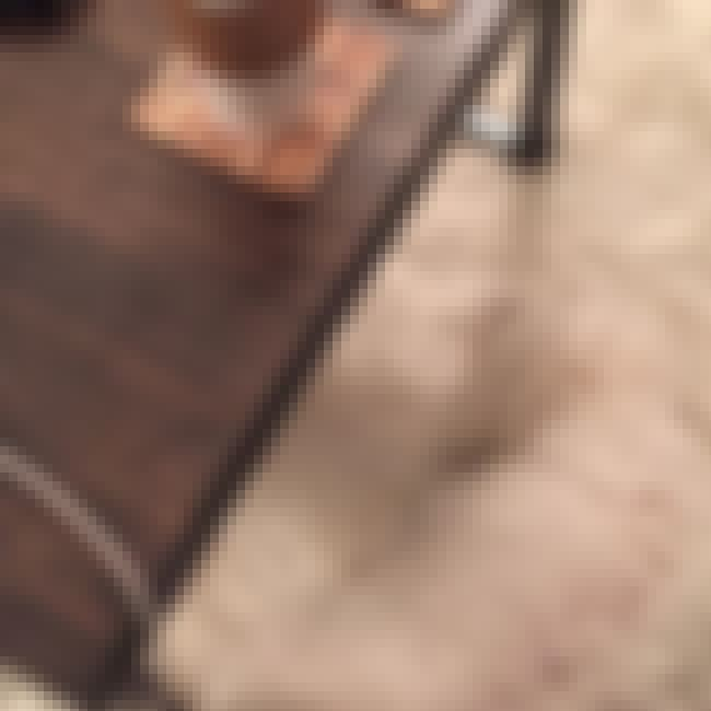 Blend Level: Epic is listed (or ranked) 3 on the list Dogs Who Accidentally Blended in with Their Surroundings