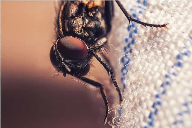 A Fly and Its Eggs is listed (or ranked) 3 on the list The Most Disgusting Things Ever Found in People's Ears