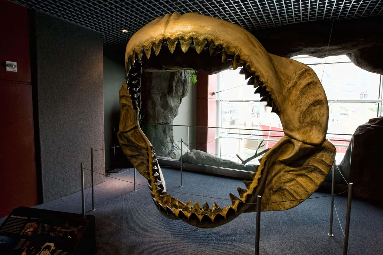 Megalodons Are Amazing! is listed (or ranked) 1 on the list 22 Things You Didn't Know About Sharks