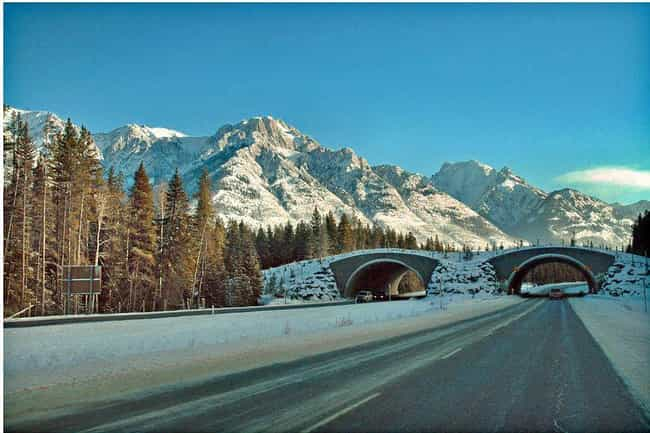 Trans-Canada Highway - 7,821 M... is listed (or ranked) 4 on the list The Longest Roads on Earth