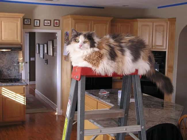 Just Doin' Some Handy Man ... is listed (or ranked) 4 on the list 28 Cats Who Found the Highest Spot