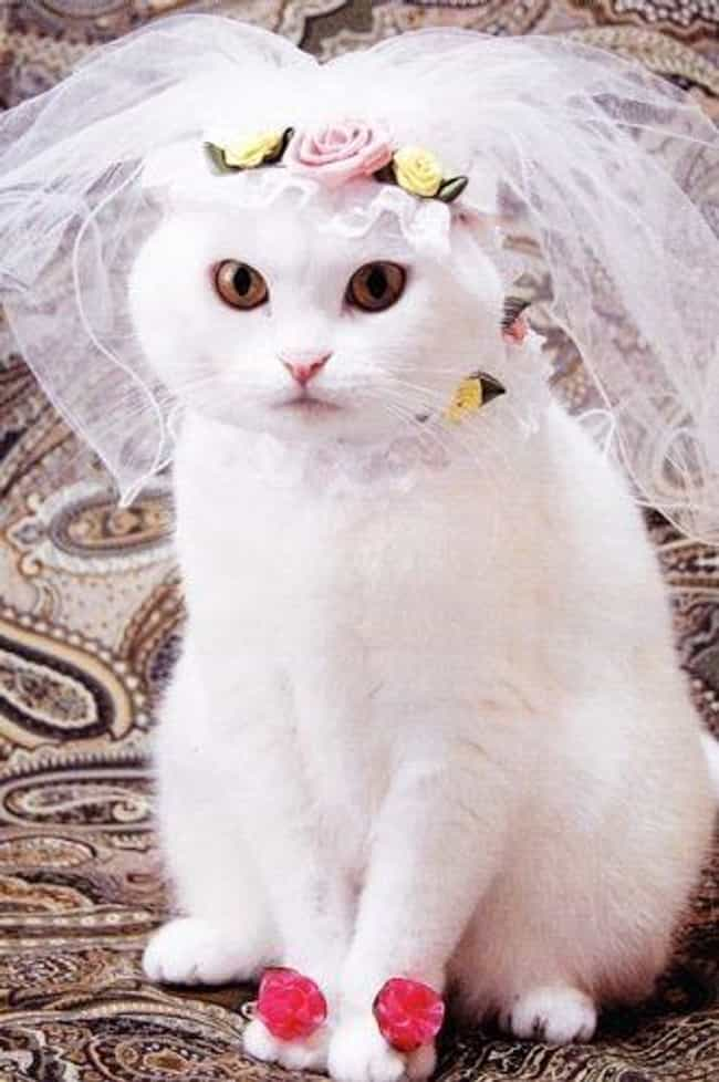 I May Be a Bride but I Blush f... is listed (or ranked) 3 on the list Purrfect Pictures of Cat Weddings