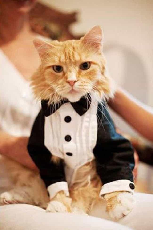 So, When You Say 'Life,... is listed (or ranked) 1 on the list Purrfect Pictures of Cat Weddings