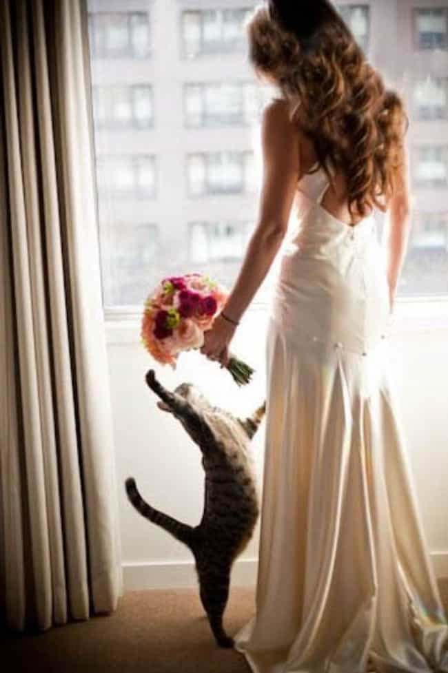 New Toy! is listed (or ranked) 4 on the list Purrfect Pictures of Cat Weddings
