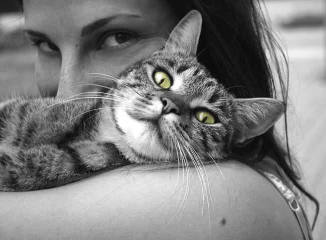 Cat Ownership Can Help Improve... is listed (or ranked) 3 on the list The Most Exciting Medical Benefits of Owning a Cat