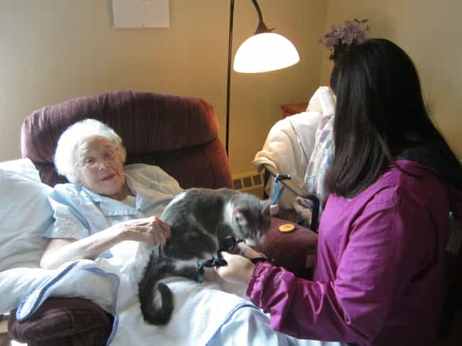 Cats Can Help Patients Sufferi... is listed (or ranked) 4 on the list The Most Exciting Medical Benefits of Owning a Cat