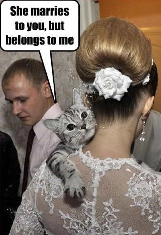 Upfront Cat Insists on Clearin... is listed (or ranked) 2 on the list Purrfect Pictures of Cat Weddings